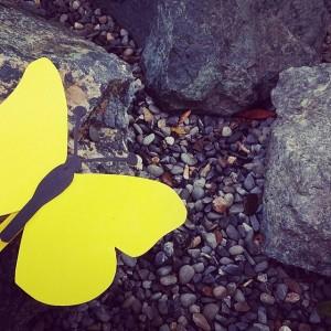 zółte motylee